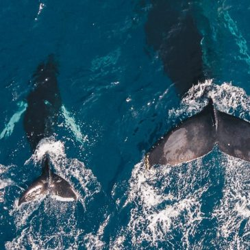 Plight Of Whales And Dolphins Worsens