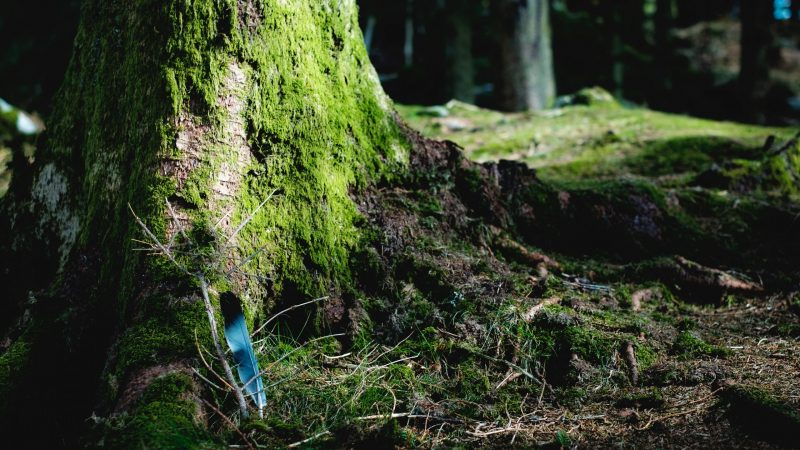 A Blue Feather Rests on a Mossy Tree Trunk